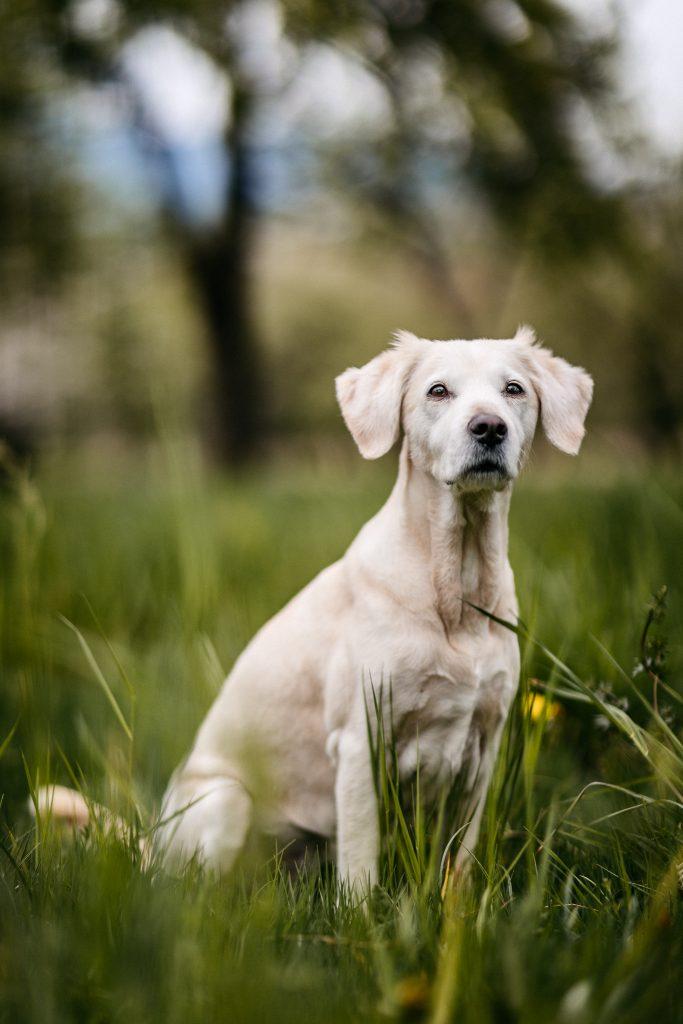 Rodinné a tehotenské foto - pes